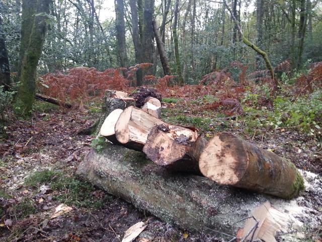 chopped-wood