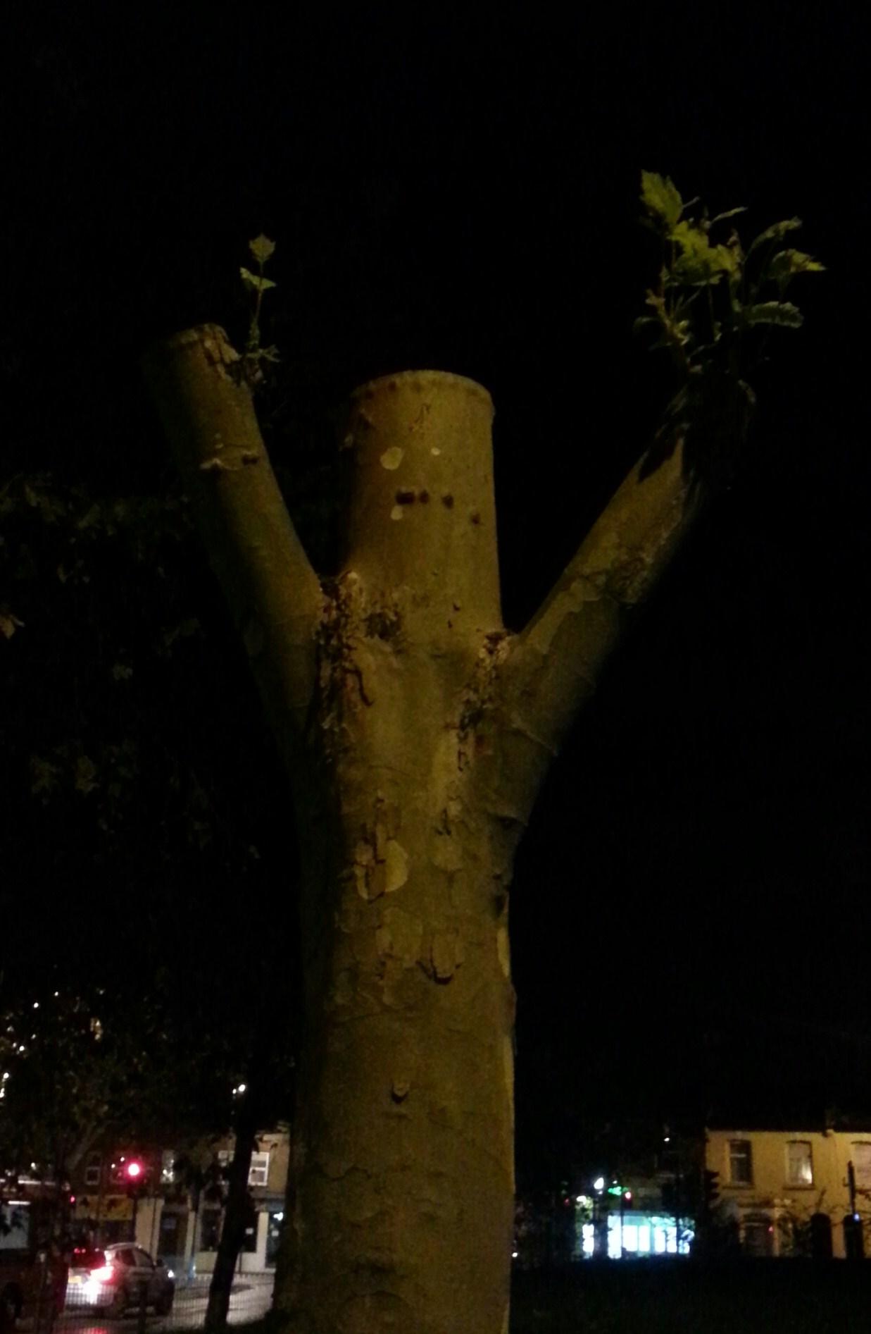 treee - crop